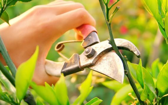 emploi jardinage chez particulier